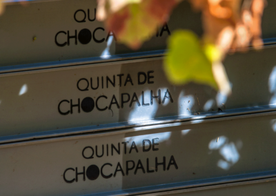 Chocapalha_Vindimas2016-108
