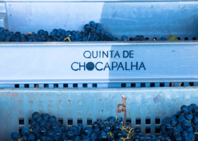 Chocapalha_Vindimas2016-143
